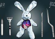 Heart Operation To Rabbit